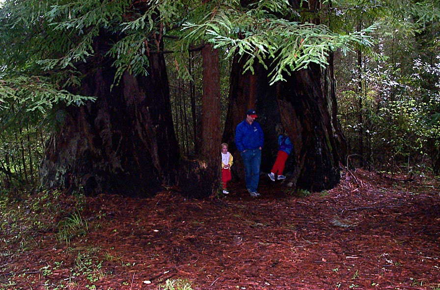 Picture from 2001: The first time we took our kids to the California redwoods.